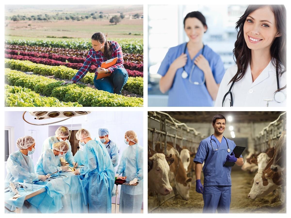 Spécialiste de la santé humaine et animale, des dispositifs et matériels médicaux, du phytopharmaceutique